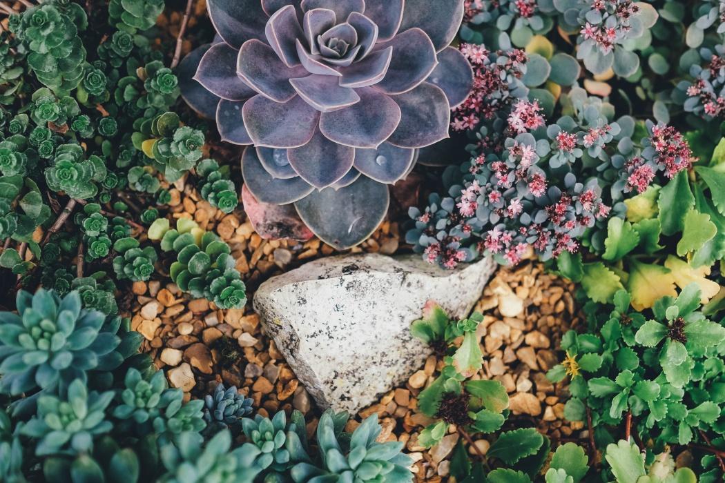 succulent rock garden photo