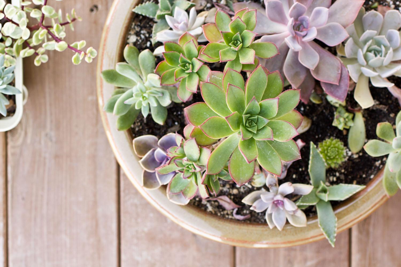 Pot of Colorful Succulents